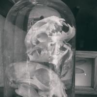 Skull-Dome