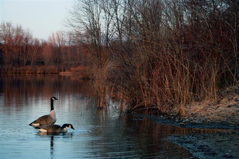 Lake-Side