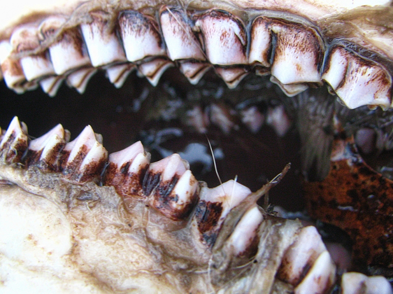 The-Jaws-of-Death