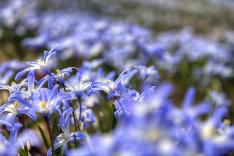 Spring-Carpet