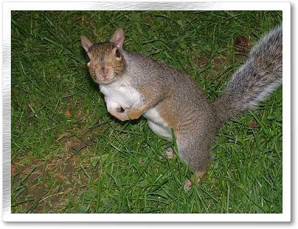 Ninja-Squirrel
