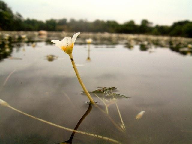 Wonder-Weeds
