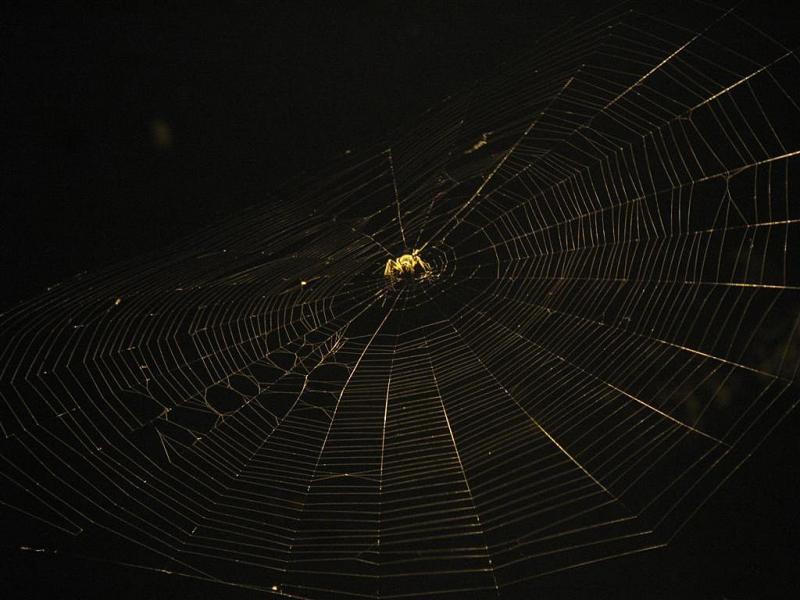 Web-1.0