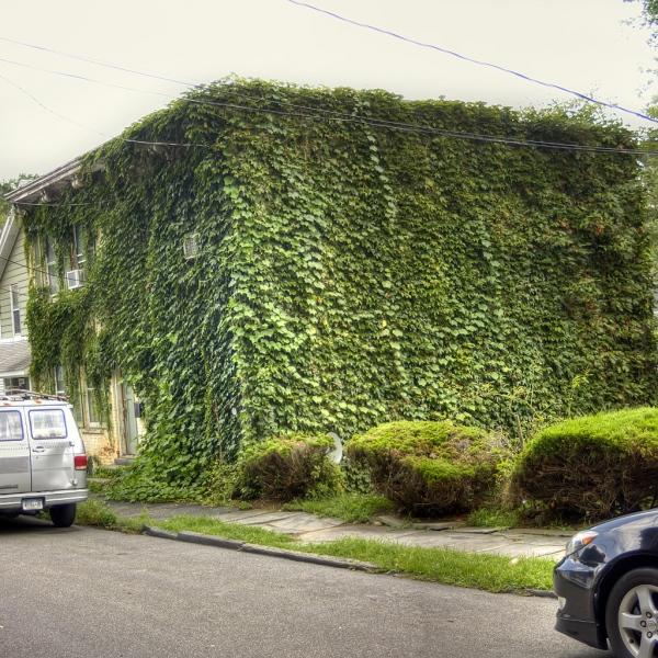 House-Plant