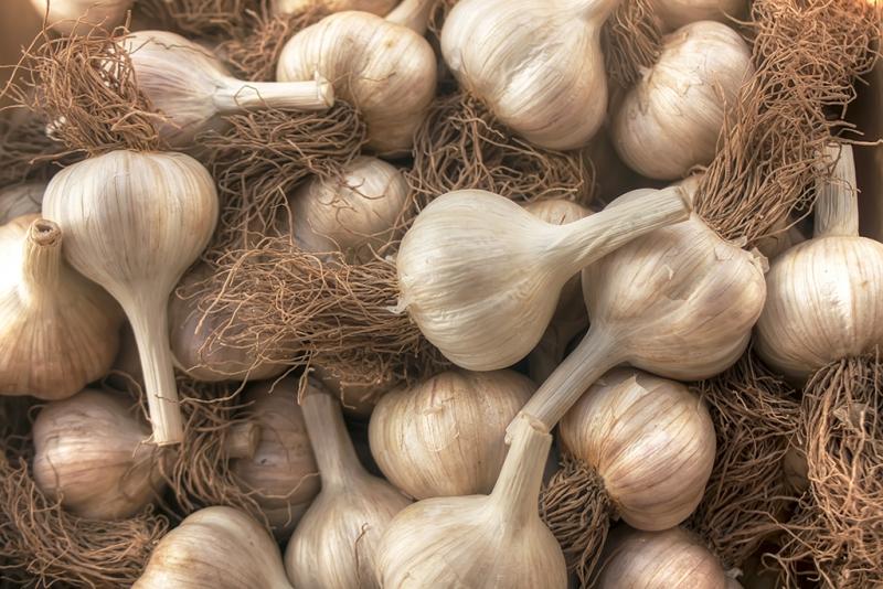 The-Garlic