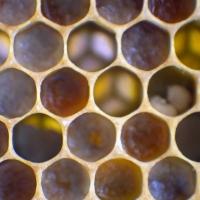 Pollen Palette
