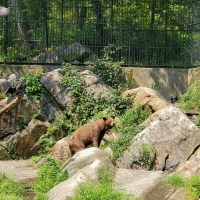 The Bear of Mear Mountain