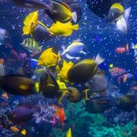 Aquarium Antics