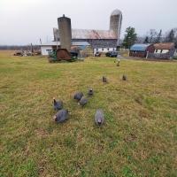 Far Flung Flock