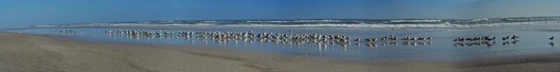 The-Gulls