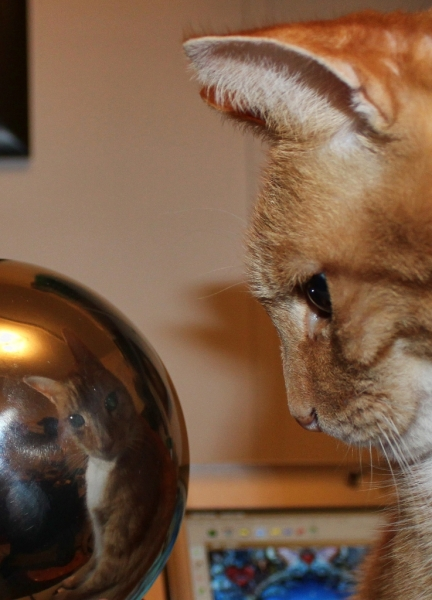 Cat-with-Globe