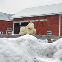 Get Off My Snow!