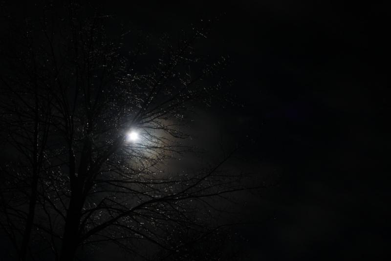 Full-Moon-Sparkle-Tree