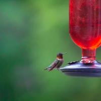 Teeny Tiny Bird