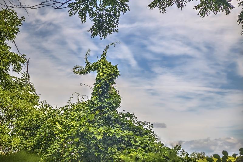 Reach-for-the-Sky