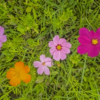 Wildflower Whimsy