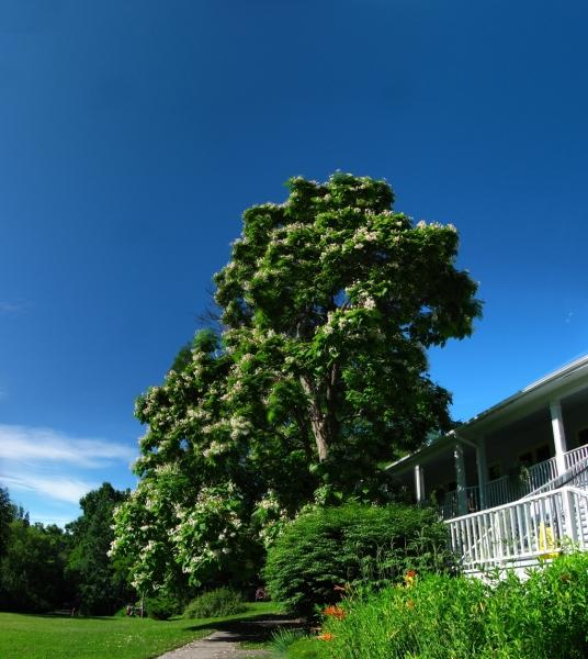 Sky-Tree