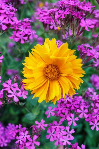 Garden-Delights