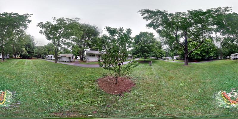Alysuns-Tree