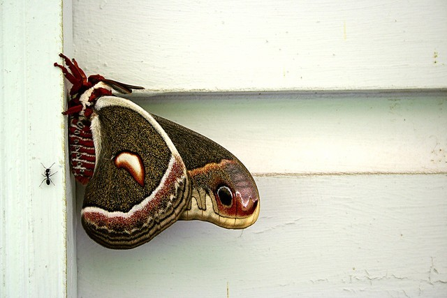 Moth-Month