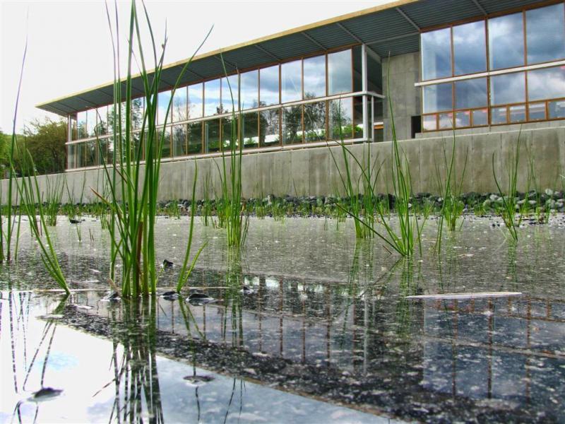 In-the-Wetlands
