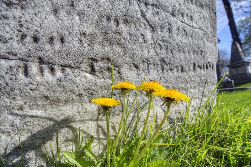 The-Dandelions-Always-Visit