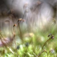 Fantastical-Flora