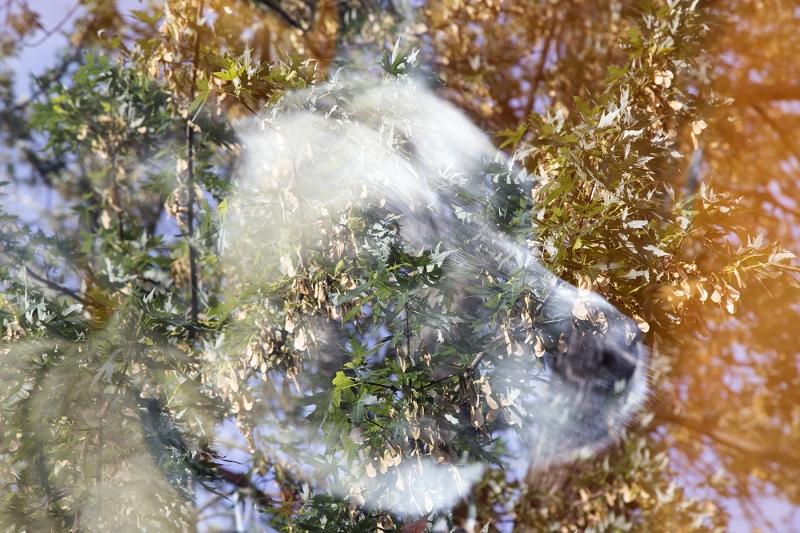 Canine-Contemplation