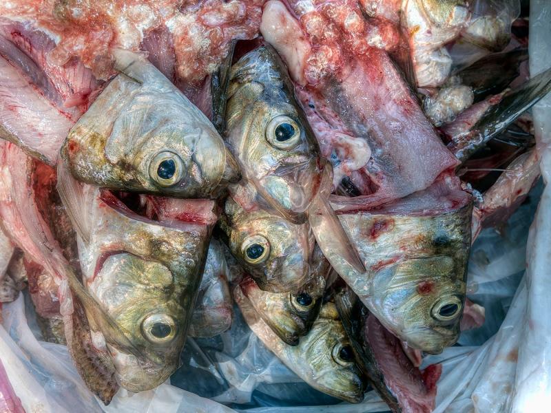 Oh-Fishy-Fishy-Fishy-Fish.