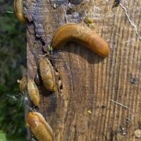 Slug Fest