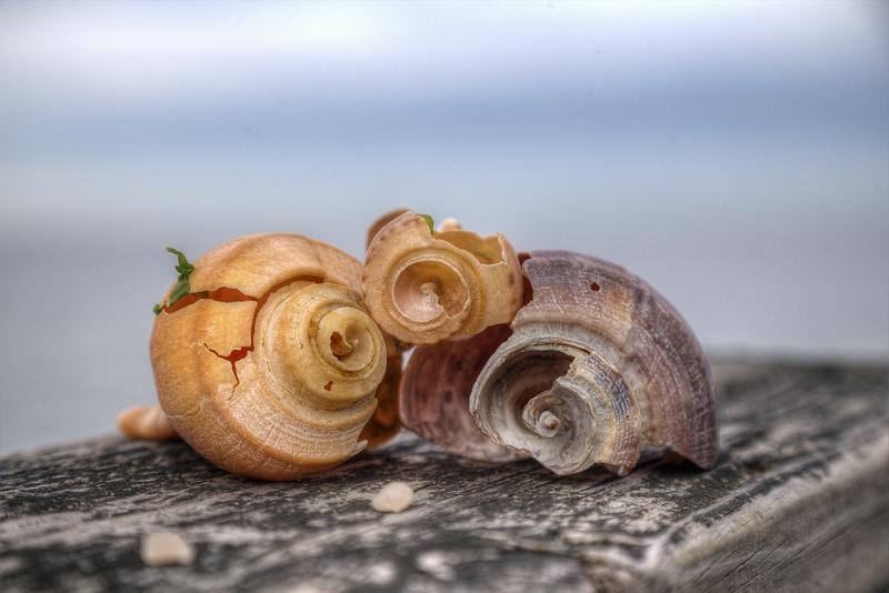 Seashore-Shell-Sale