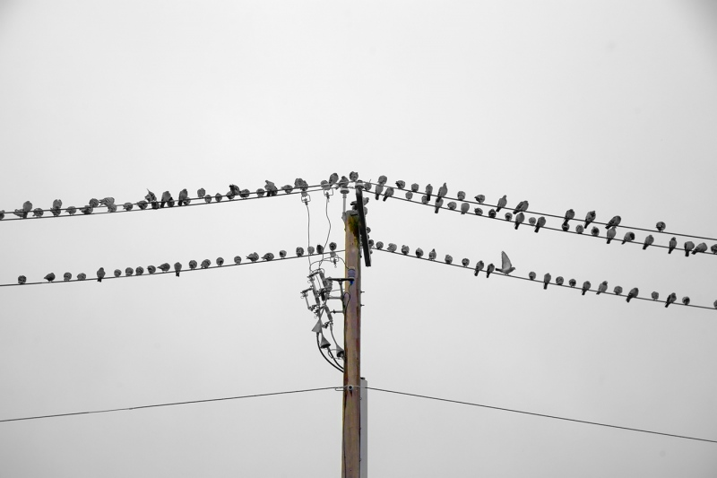 The-Birds-Are-Doing-That