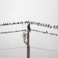 The Birds Are Doing That