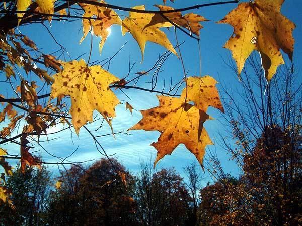 Fall-Sky