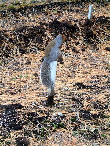 Squirrel-on-a-Stick
