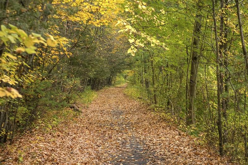 On-the-Rail-Trail