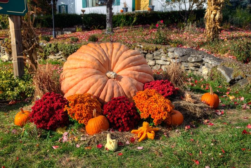 Prize-Pumpkin