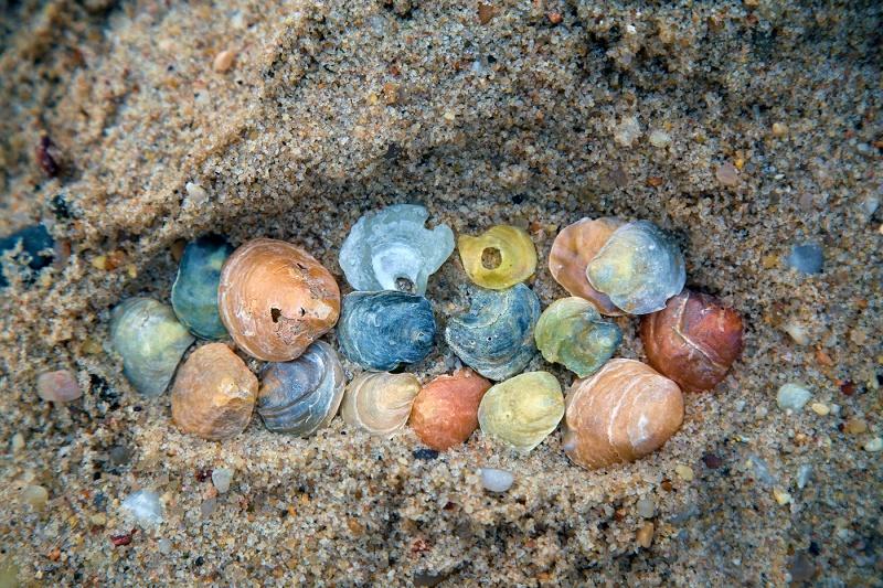 Its-Shells-in-a-Footprint