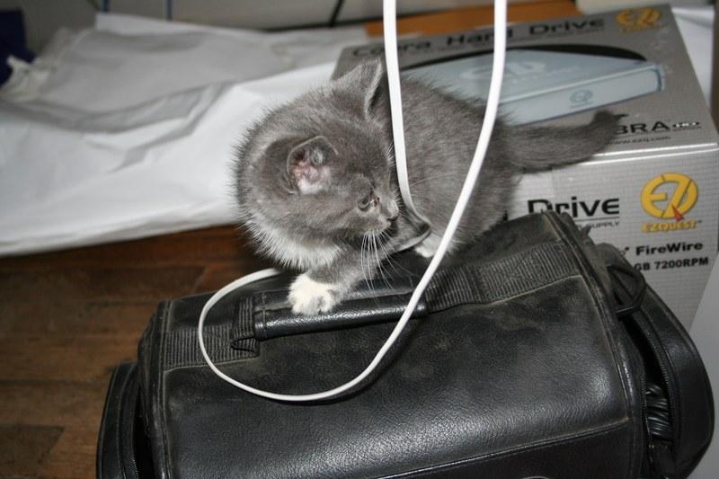 Kitty-Kat